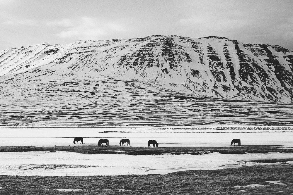 Iceland (30).jpg