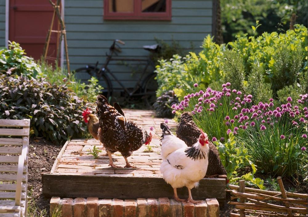 Camomile Cottage BandB in Suffolk