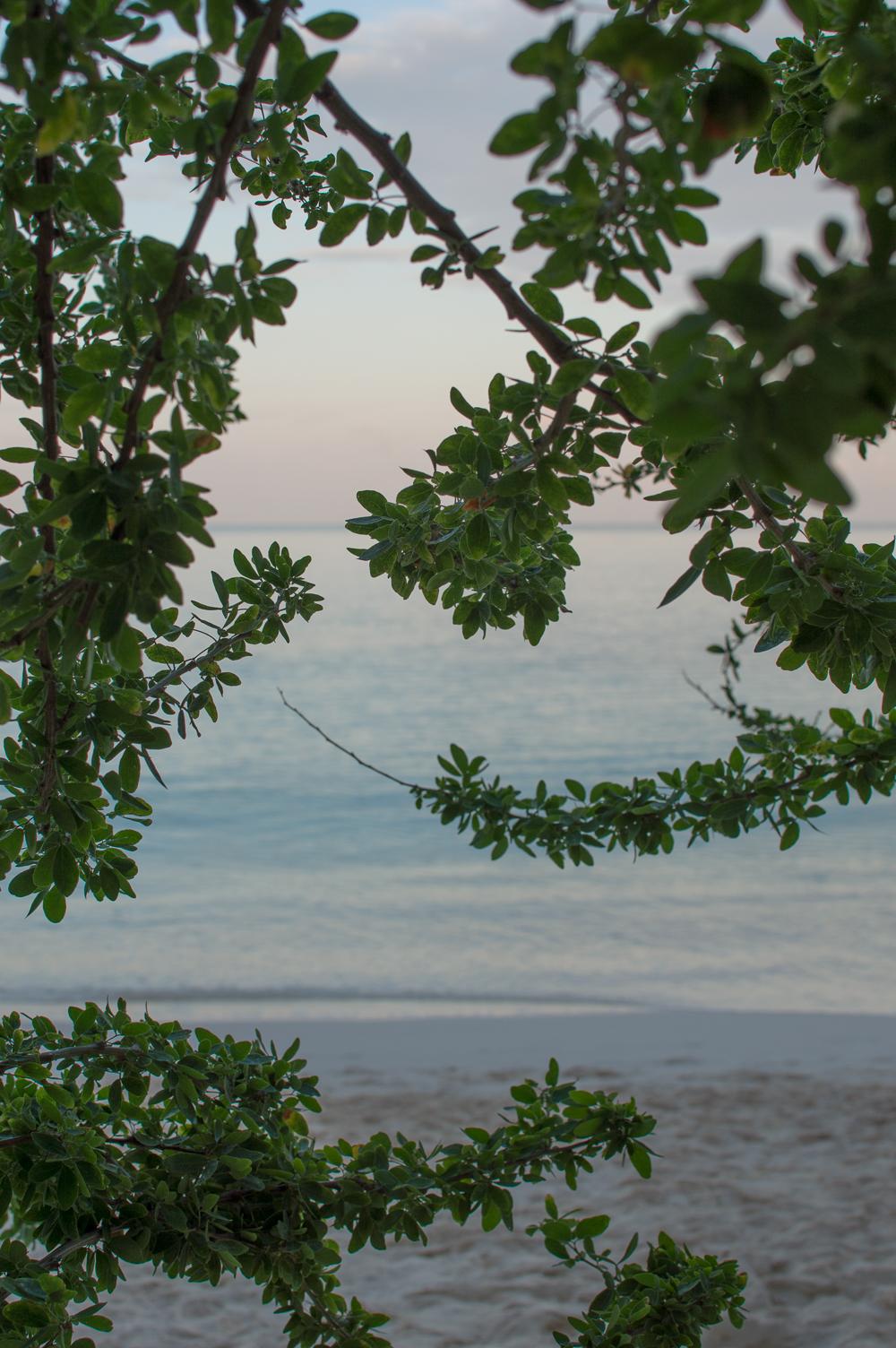 Cayman week 1 (46 of 80).jpg