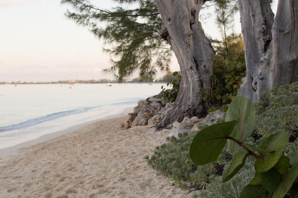 Cayman week 1 (47 of 80).jpg