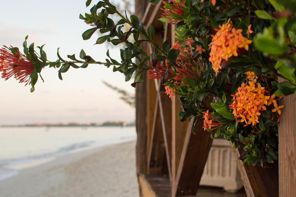 Cayman week 1 (42 of 80).jpg