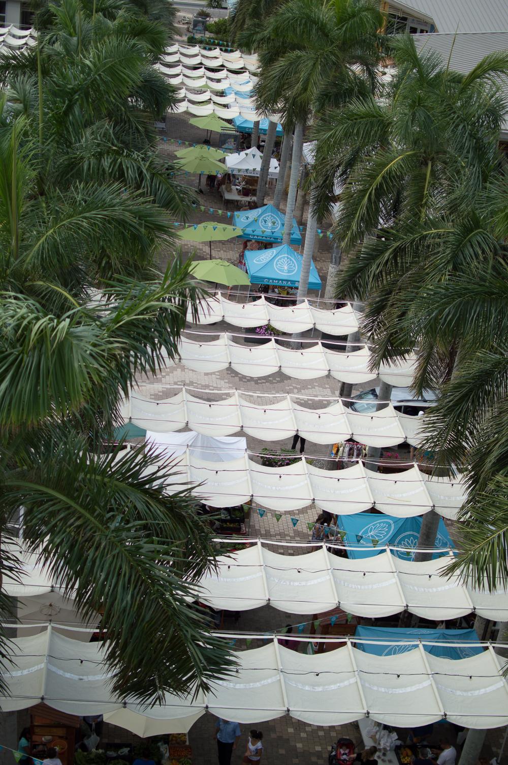 Cayman week 1 (60 of 80).jpg