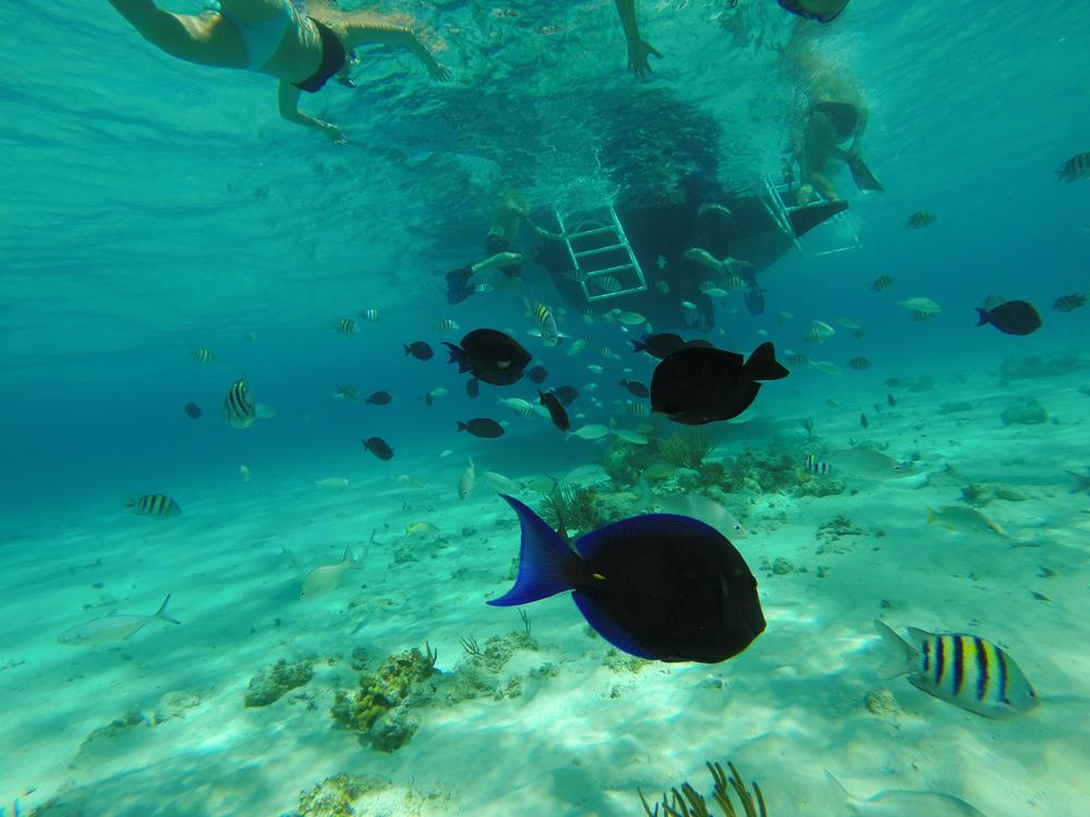 Cayman week 2 (50 of 69).jpg