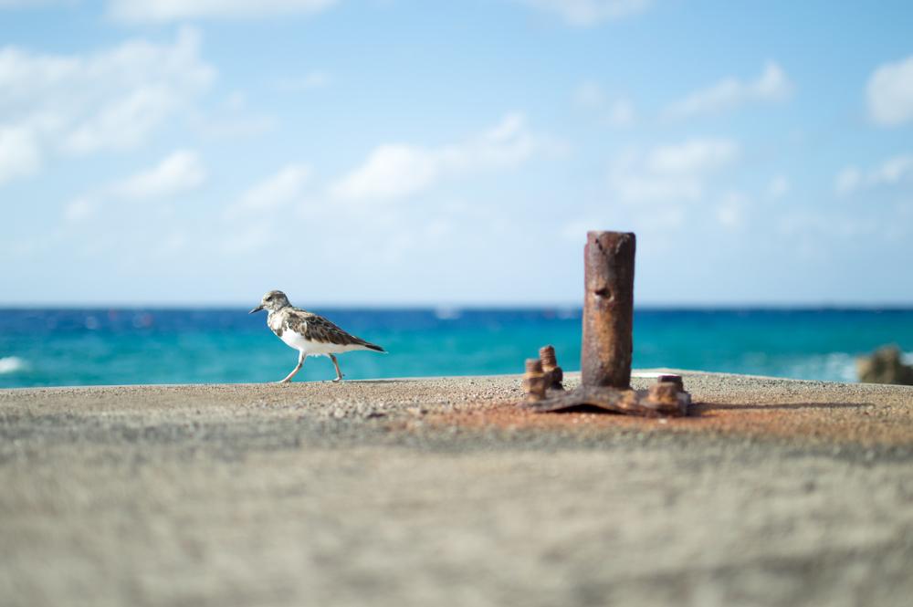 grand cayman travelogue
