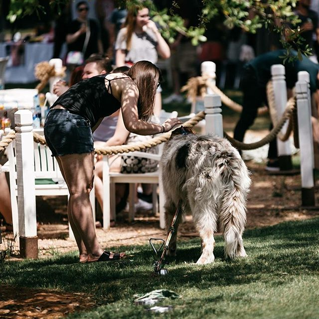 Come celebrate the cooler weather with your furry friend this evening! The Grove is the best place to gather with friends.