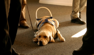 stuffyoushouldknow-podcasts-wp-content-uploads-sites-16-2013-10-guide-dog-600x350.jpg