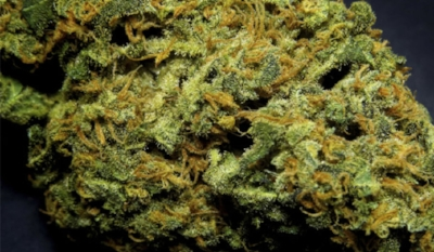 stuffyoushouldknow-podcasts-wp-content-uploads-sites-16-2014-05-h-marijuana-w-600x350.jpg