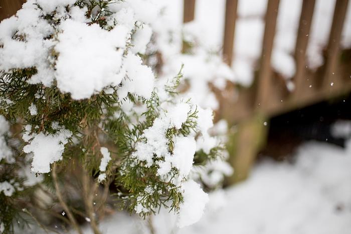 snow-day-portrait_0394