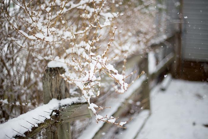 snow-day-portrait_0397