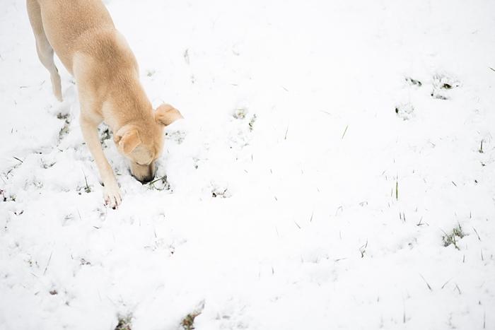 snow-day-portrait_0402