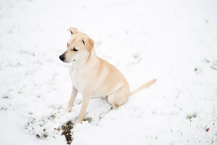 snow-day-portrait_0403