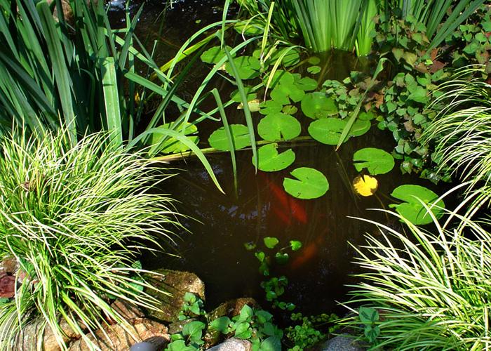 Take Action Water Garden Designs by Tharpe