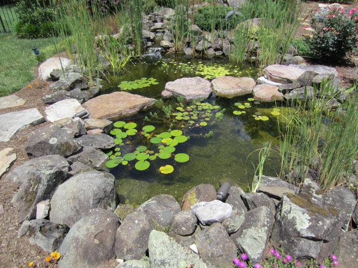 Tharpe Watergardens015.JPG