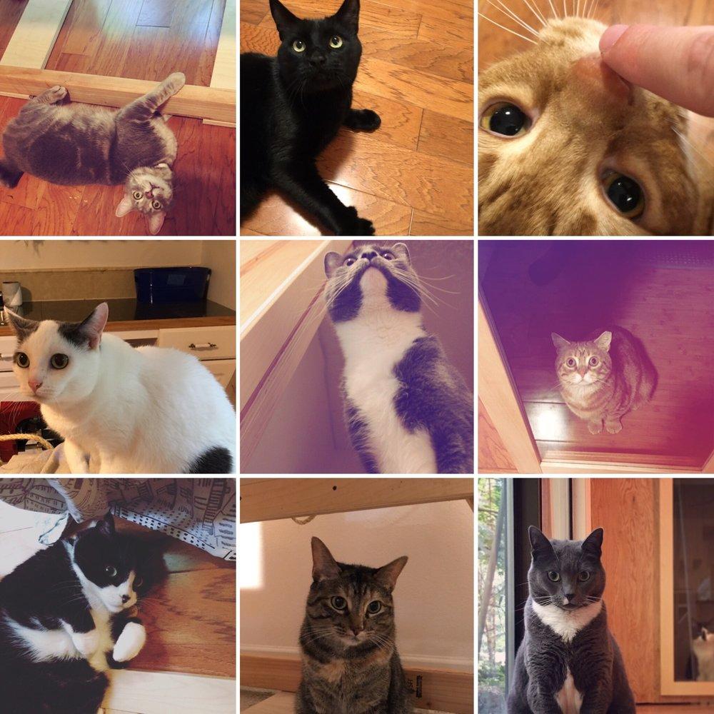 Summer Kitties 2017