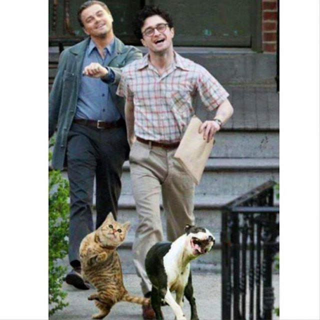 There is a song out there somewhere about Friday's, but this picture is a more apt summary. Food till 11pm tonight and bar open till 1. #slighhouse #edinburghrestaurants #edinburghcocktails #danielradcliffe #leodicaprio #happydays