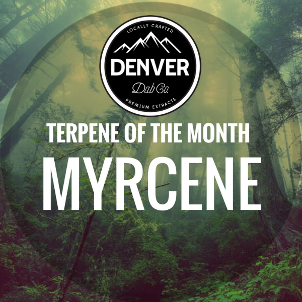 Myrcene - Terpene of the Month - Denver Dab Co.