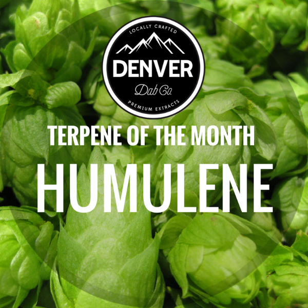 Humulene - Terpene of the Month - Denver Dab Co. - Cannabis