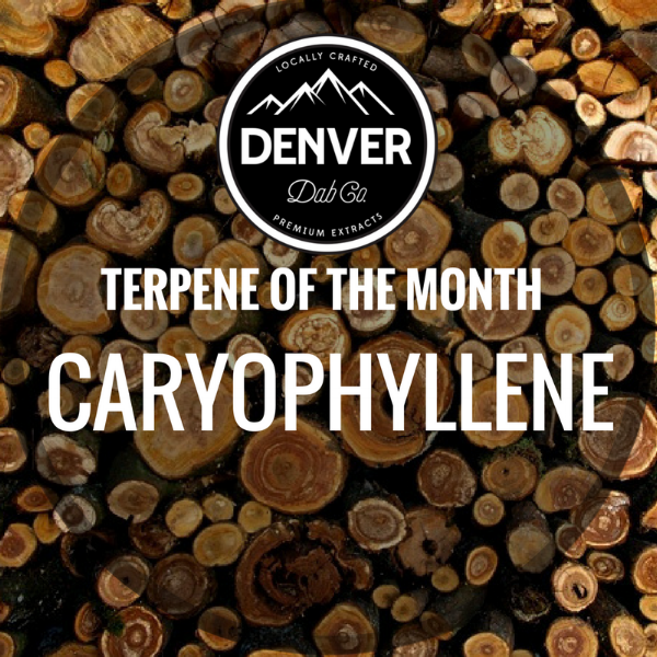 Caryophyllene - Terpene of the Month - Denver Dab Co.