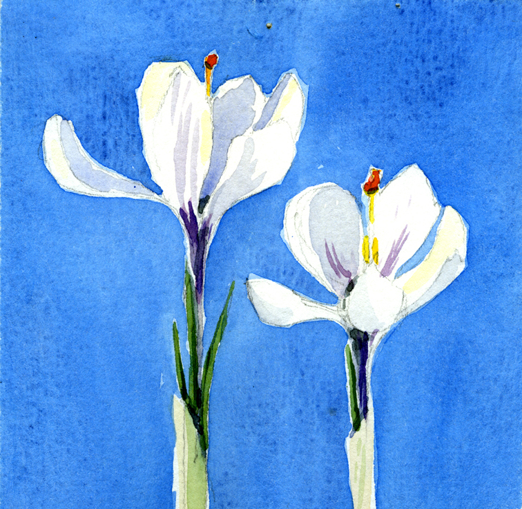 Aquarelle: spring crocus
