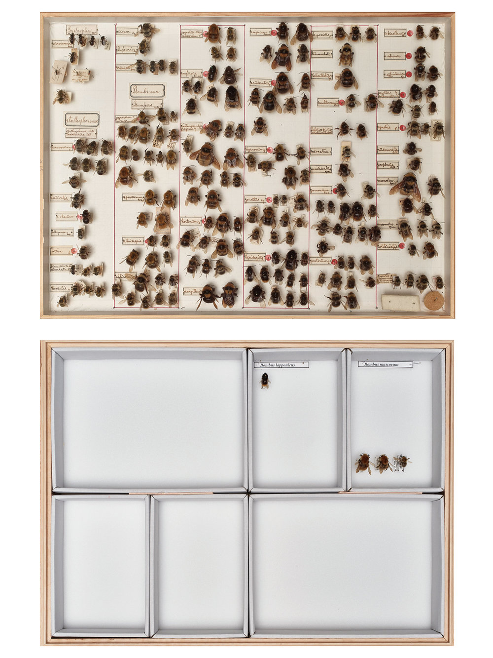 Historic and Contemporary Bumblebee Collection LOCATION Entomological Association Krefeld, Germany DESCRIPTION The decline in insect biomass and diversity in recent years is dramatic. Causes and consequences are largely unknown.