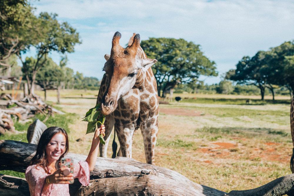 Selfie time!!! Feeding giraffes at Wild Is Life