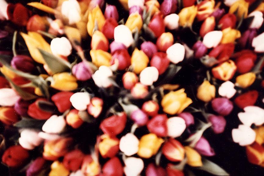 BBRLaananen077amsterdamflowers.jpg