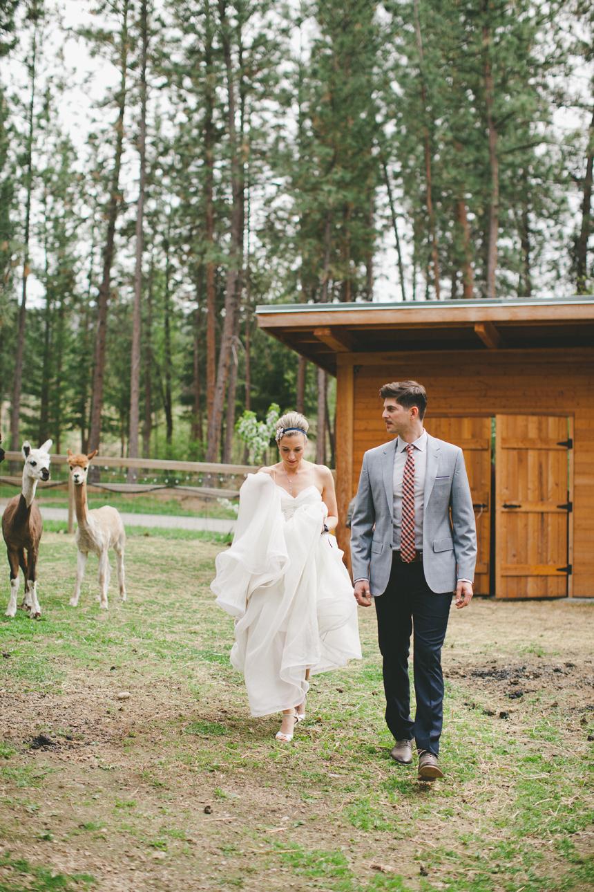 Kelowna Alpaca Farm Wedding
