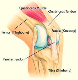 Knee-Anatomy.jpg