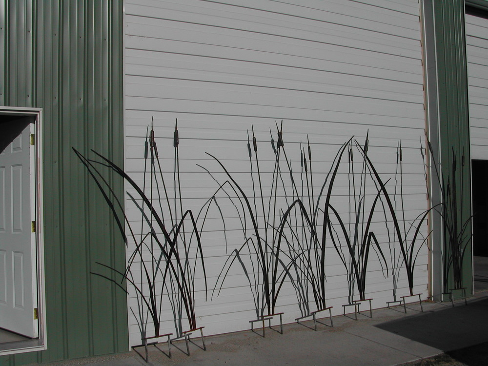Big CAttails 1.JPG