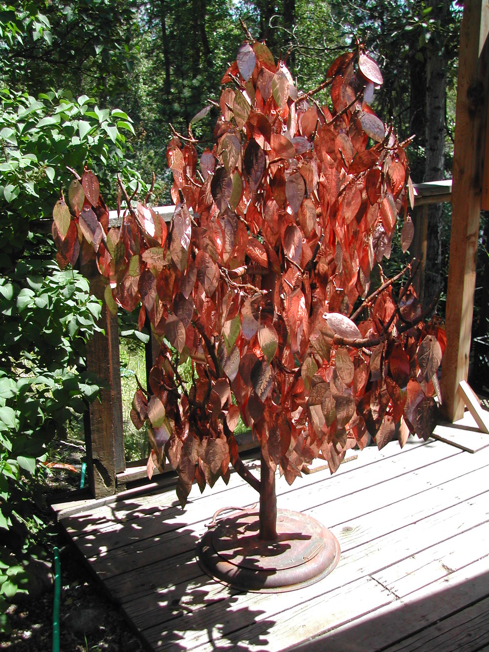 Conservancy Tree 1.JPG