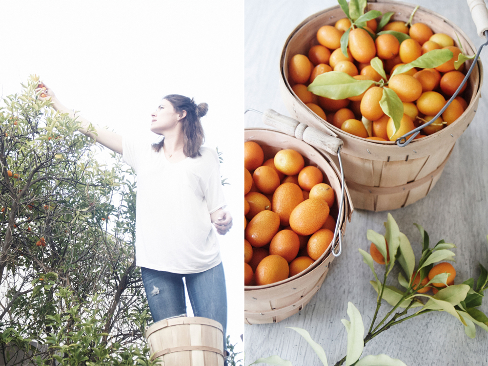 kitchenaid food processor citrus juicer attachment