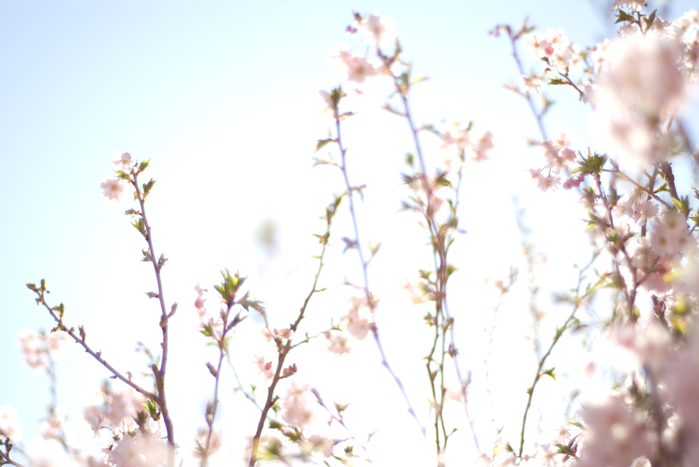 Get ready for spring today     Spring Packages