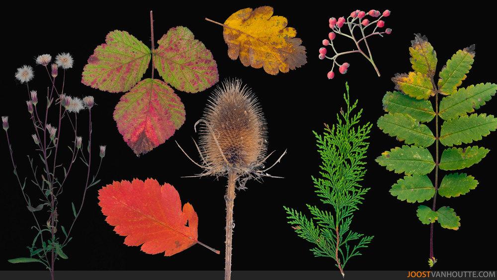 foliage_thumbnail_web.jpg