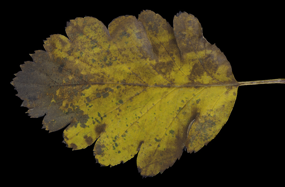 foliage_10.jpg