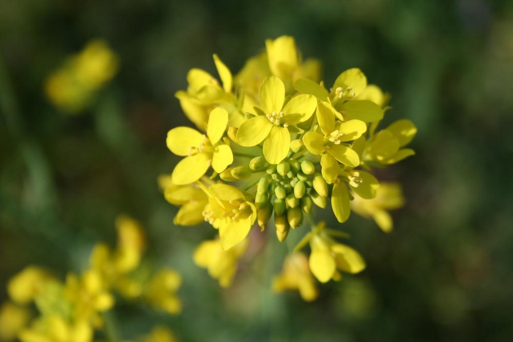 flower-783946_1920.jpg