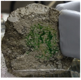Spirulina algae happily growing on the original pervious concrete prototype.