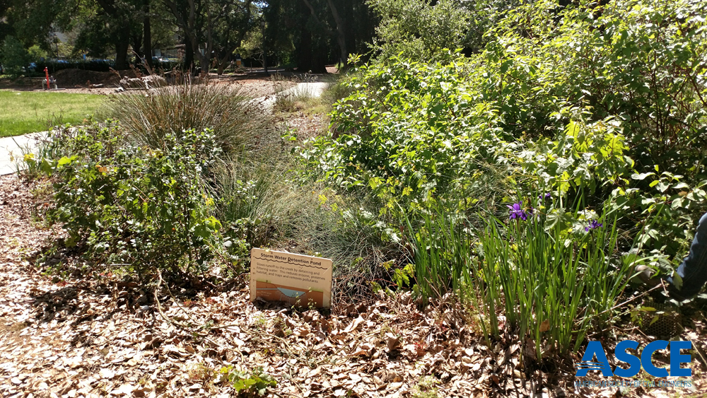 A newer rain garden at UCB