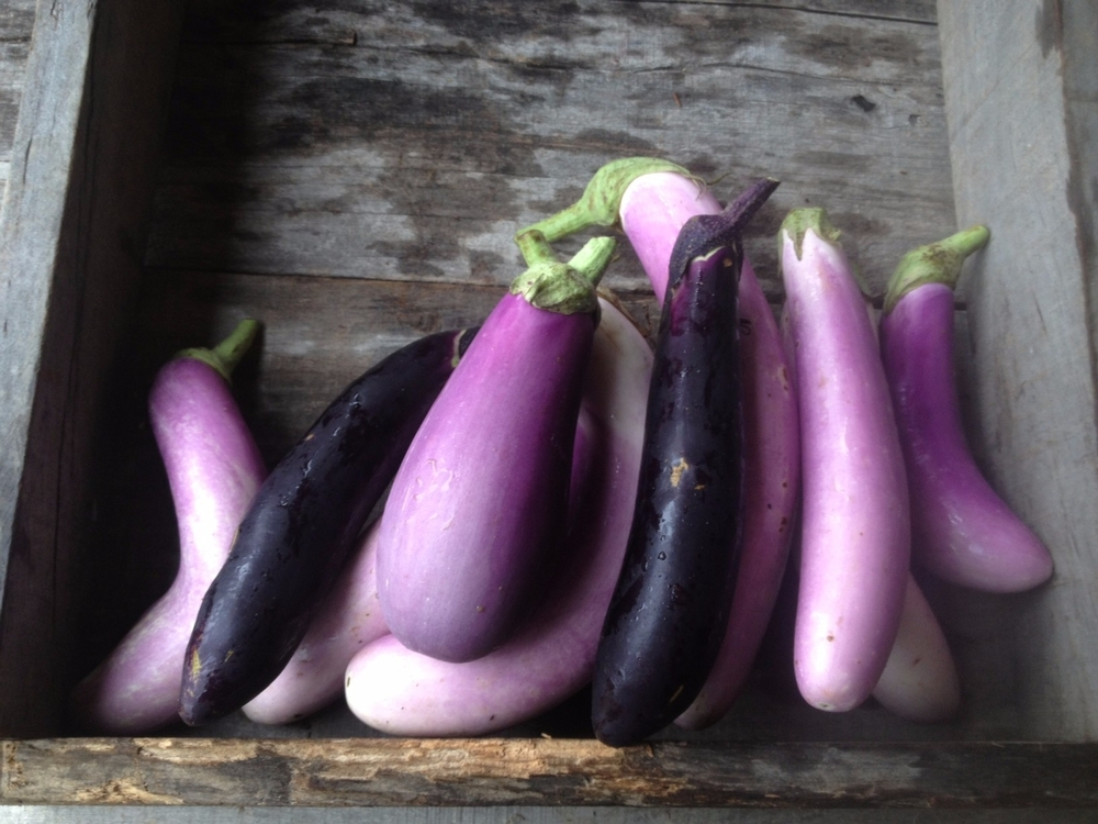 5 lbs of eggplant