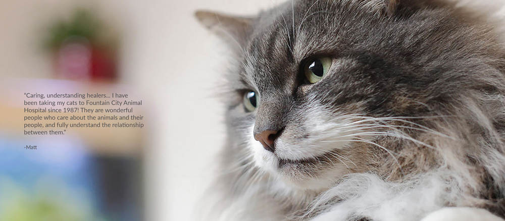01 Cat.jpg