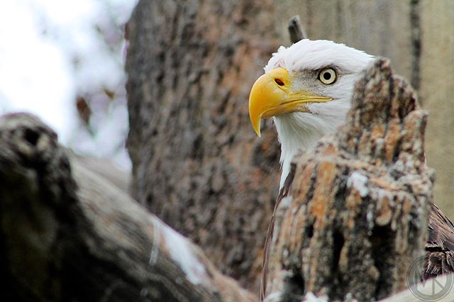Beak. Shot at Memphis Zoo. #whatsyournature @nature_org