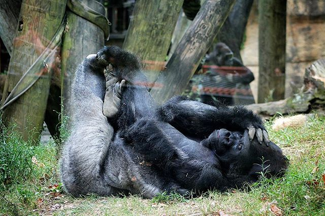 Watching me watching you. Shot at Memphis Zoo. #whatsyournature @nature_org