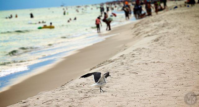 Birds. 🦅 #birds #birdsofinstagram #beachbirds #orangebeach