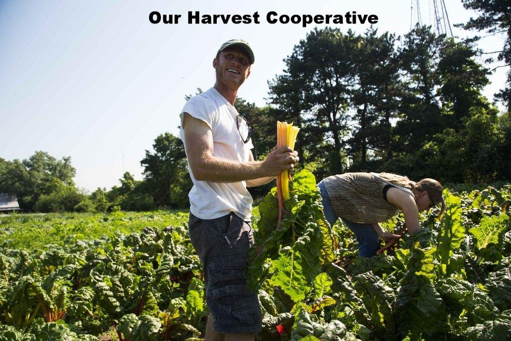 Ourharvest.jpg