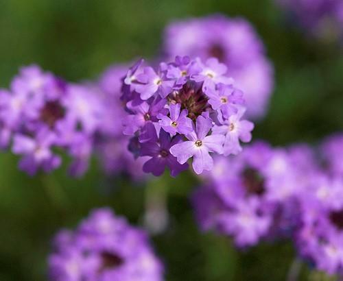 focus flower.jpg