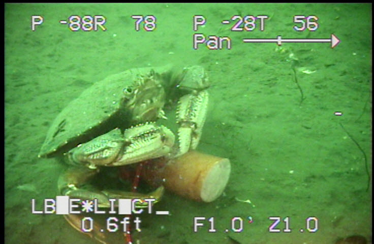 a crab's dinner captured by the spectrum 90 camera