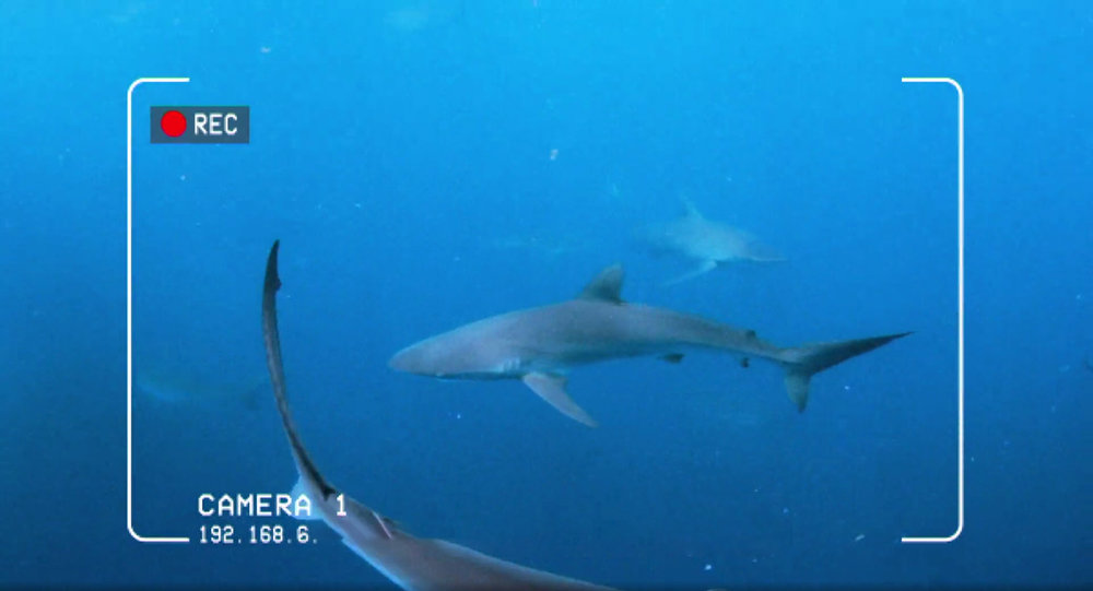 Camera footage from The Lost Cage episode of Shark Week