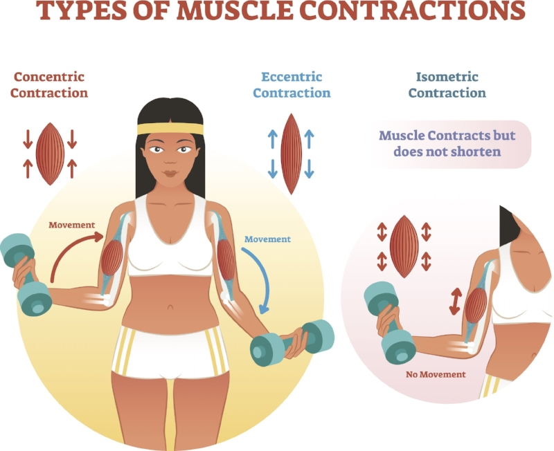 Muscle Contractions Diagram.jpg