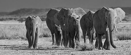 Elephant family heading toward Tanzania  Nikon D3, 200-400mm @ 400,  f/4, ISO 320, f/8.o at 1/320 sec (hand held)