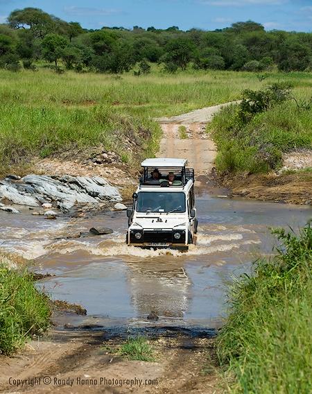 Tarangire River Crossing Thomson's Style  Nikon D3, 70-200VR @ 110mm,ISO 250, f9 @ 1/1250 sec