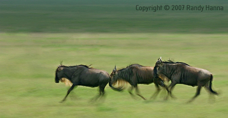 Serengeti National Park, Tanzania, Jan 2007  Nikon D2x, 70-200 f2.8VR @ 200mm, ISO 100, f14 @ 1/20 sec